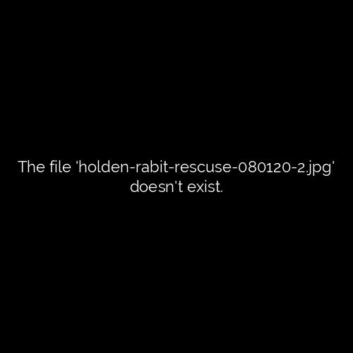 Holden Police Rescue Five Rabbits, Transport for Rehabilitation 1