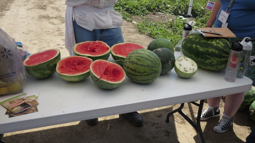 Monsanto evil watermelon