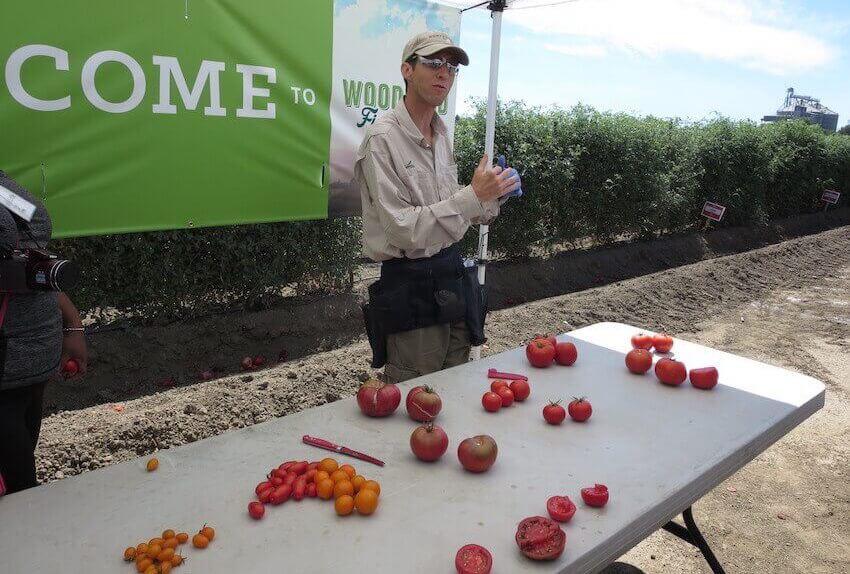 Monsanto evil tomatoes