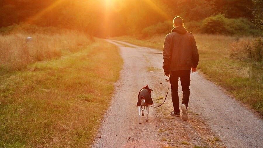 walk dog exercise