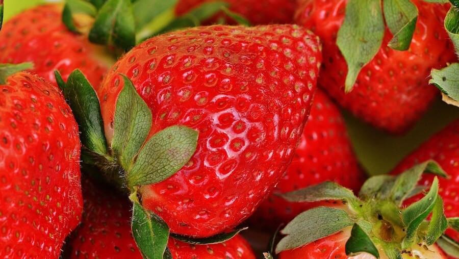 organic strawberries vs conventional strawberries