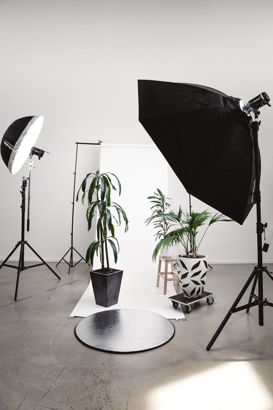 A soft light, backdrop and some plants set up for a photo session