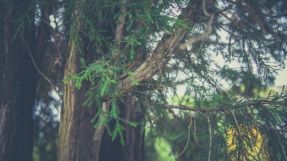 NATULIQUE Roots